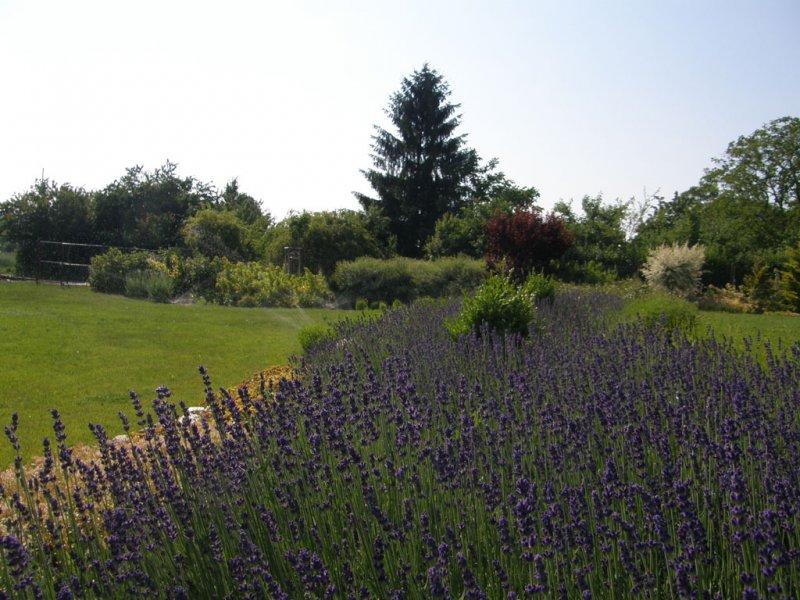 zahrady-130